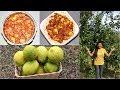 Traditional Nimbu Achar - Lemon Pickles Video Recipe | Bhavna's Kitchen