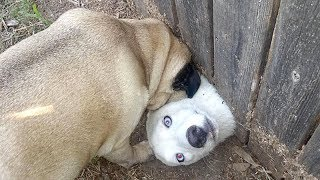 Best of WEIRD FUNNY DOGS - How long CAN YOU HOLD YOUR LAUGH?