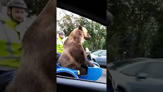 Россия. Медведь на мотоцикле. Russia. Bear riding a motorcycle.