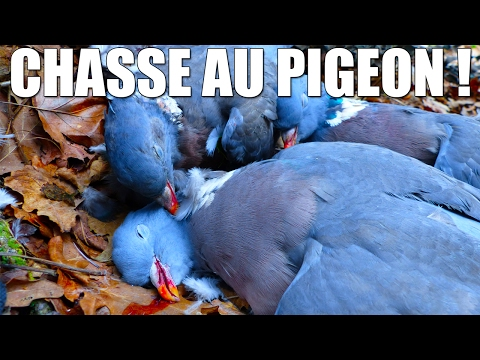 Chasse Hivernale de la Palombe ! - Marius Chasse #1