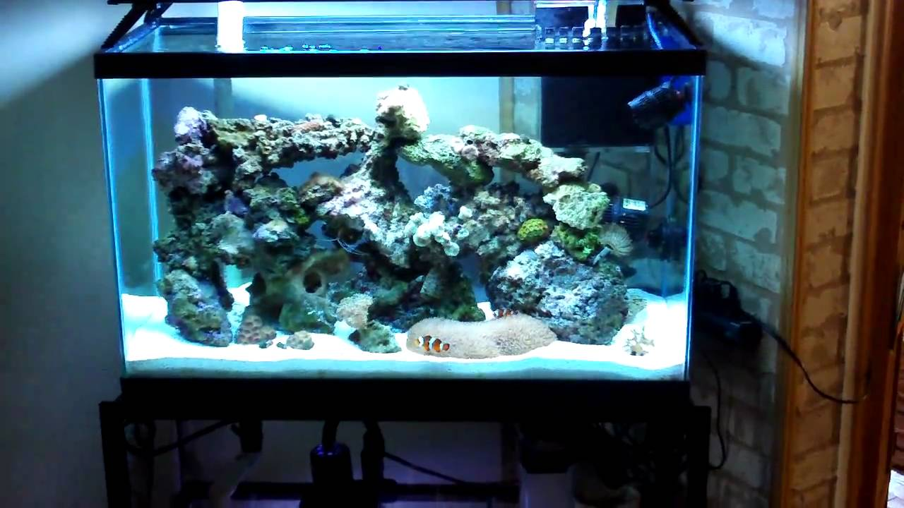 30 gallon reef tank update 7 youtube for 20 gallon saltwater fish tank