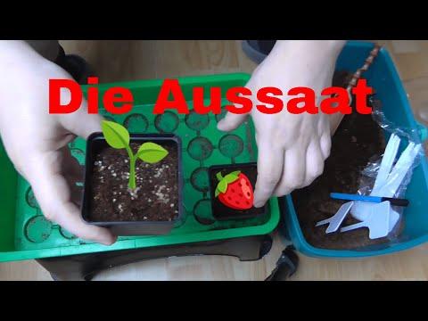 Erdbeeren und Wegerich säen