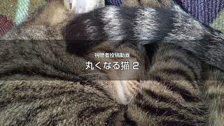 丸くなる猫2 猫動画