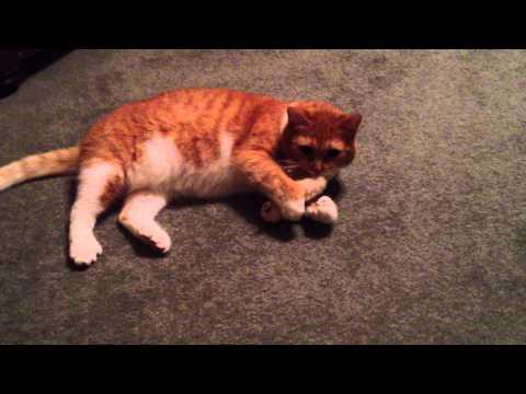jrs cat's best nature gold cat litter