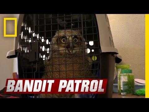 Puppet Feeding Igor The Owl | Bandit Patrol