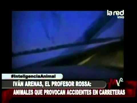 Iván Arenas recopiló imágenes de accidentes de animales por imprudencias del hombre