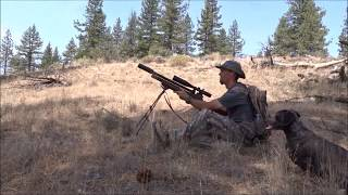 Varmint Hunting With Air Rifles (GRAPHIC HUNTING FILM) 18+