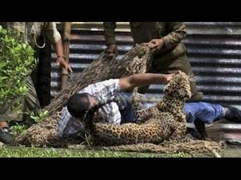 Ataque de animales salvajes a seres humanos parte 3  -  Attack wild animals Humans