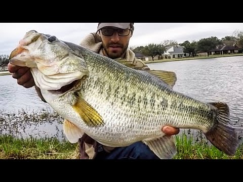 BASS OF A LIFETIME hits RIGHT at the BANK