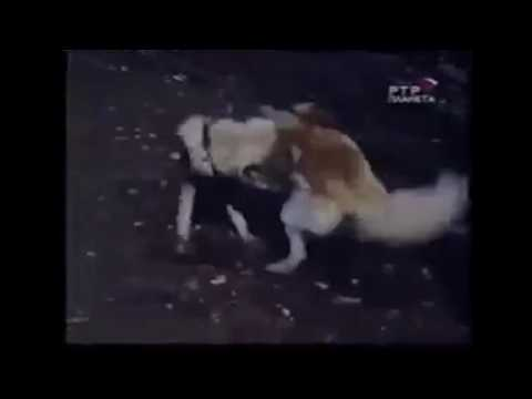 Dog VS wolf  .. fight to the death .. brutal fight