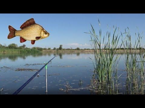 КАРАСЕВЫЙ РАЙ! Куча странного карася. Река Или, Рыбалка на поплавочную удочку, Карась, Сазан