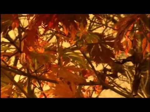 Вивальди Антонио - Autumn