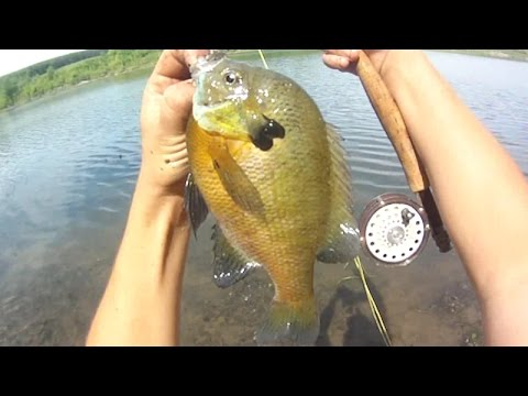 Fishing Lures For Bluegill Lure Fishing 109 Fly