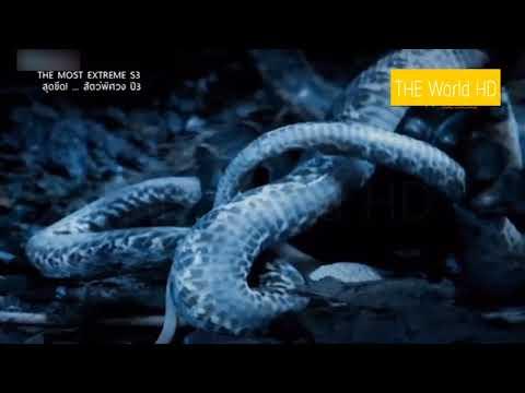 สารคดี 10 อันดับ สุดยอดสัตว์ร้ายในตำนาน สัตว์พิศวง The Most Extreme