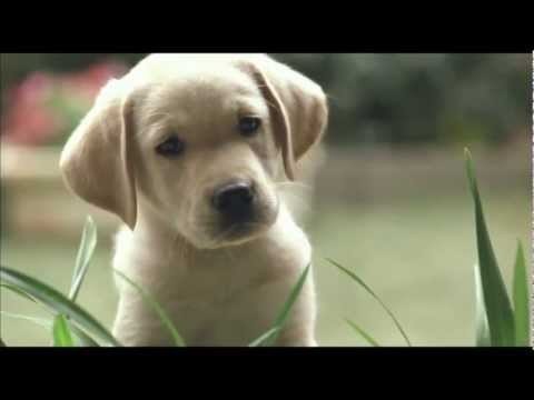 Quill: The Life Of A Guide Dog ~ Trailer