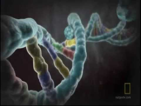 National Geographic - Explains The Biology Of Homosexuality - Epigenetics video