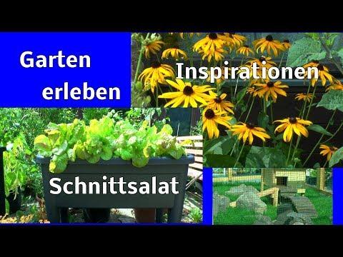 Garten erleben wie es wächst und gedeiht Die Meterbohne wächst 10 cm am Tag