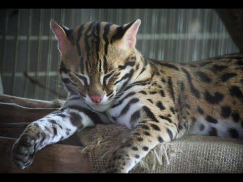 Aminals in National Zoo of Malaysia | Zoo Negara | Taman Melawati | Malaysia 2015