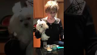 Luvafoodie Dog Lovers Spice Blends helps Mya the Dog Eat