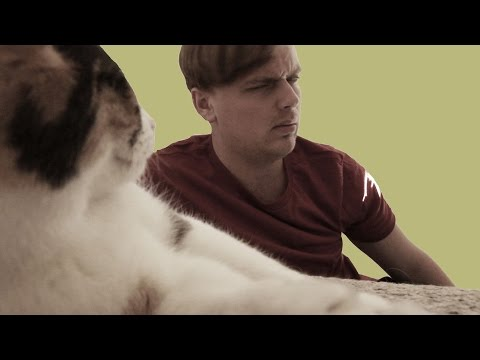 Man Gives His Cat 11,453 Stern Looks