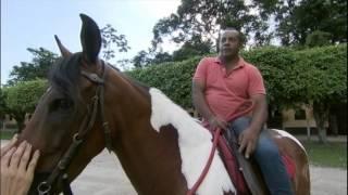 Reação de cavalo no enterro do dono comove internautas