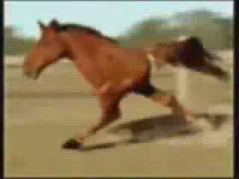Incredibile Cavallo Con 2 Zampe !!!! video
