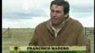 Hereford - Francisco Madero
