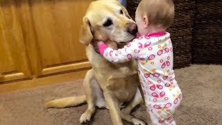 Cute Dogs Compilation 2018 - Animals Are So Funny