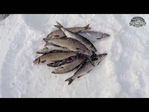 ловля хариуса зимой амурская область