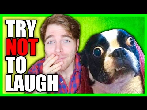 TRY NOT TO LAUGH *CHALLENGE* 6!