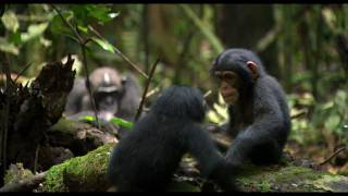 Chimpanzee - Chimpanzee | trailer #1 US (2012)