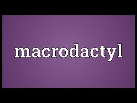 Header of macrodactyl