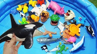 Sea Animals for Kids Videos! Blue Pool Water Tub For Kids Video