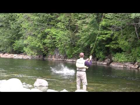 Huge dry fly steelhead action in BC