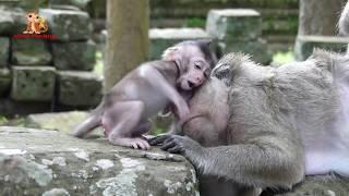 Baby Monkey Polly