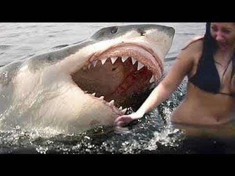 Western Australia Shark Cull Shark Culling in Western