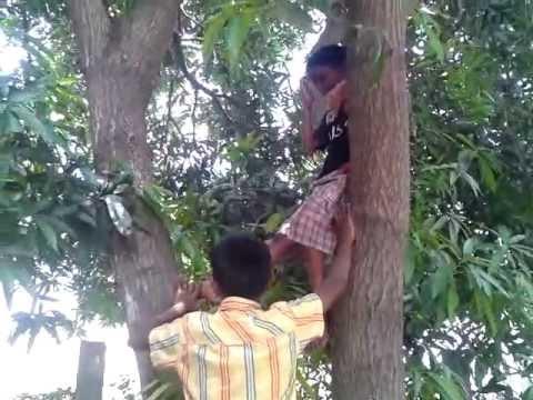 Climbing the Mango Tree