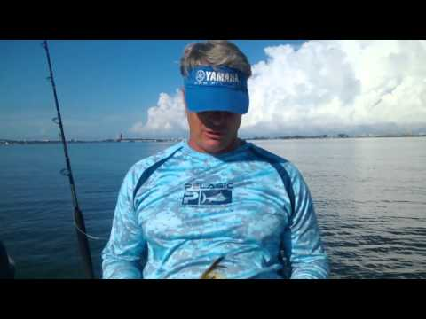 Sarasota Fishing Charters - Blackfin Tuna Catching Tips