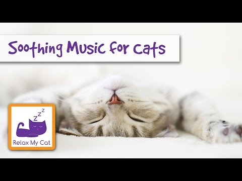 Cat Music Relaxing music for cats stressed Relax my cat soothing songs World music Light Piano