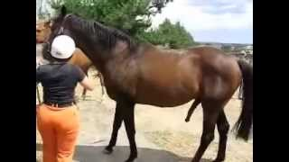 horse and hot woman