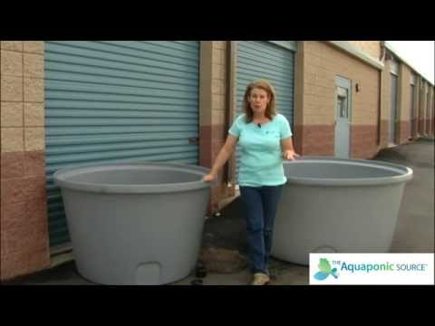How To Select Your Fish Tank For Aquaponics