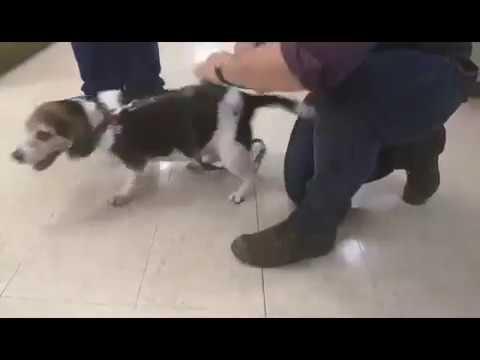 鳴き声がスターウォーズのタイ・ファイター犬になってる面白編集映像