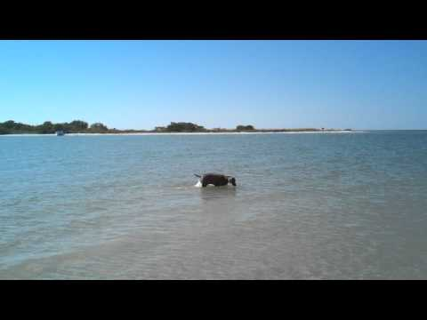 Beau fishing at the Bonita Springs Dog Beach