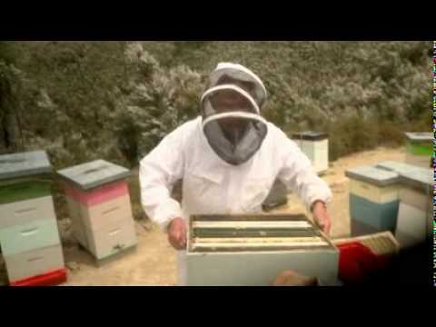 Manuka Honey Production