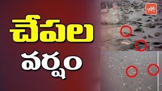 Fish Rain in Amalapuram | Pethai Cyclone | AP News | Pethay Toofan