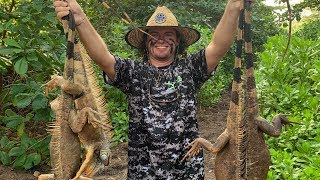 Hunting IGUANA in the Cayman Islands with AIR RIFLES!!!! (catch clean cook)