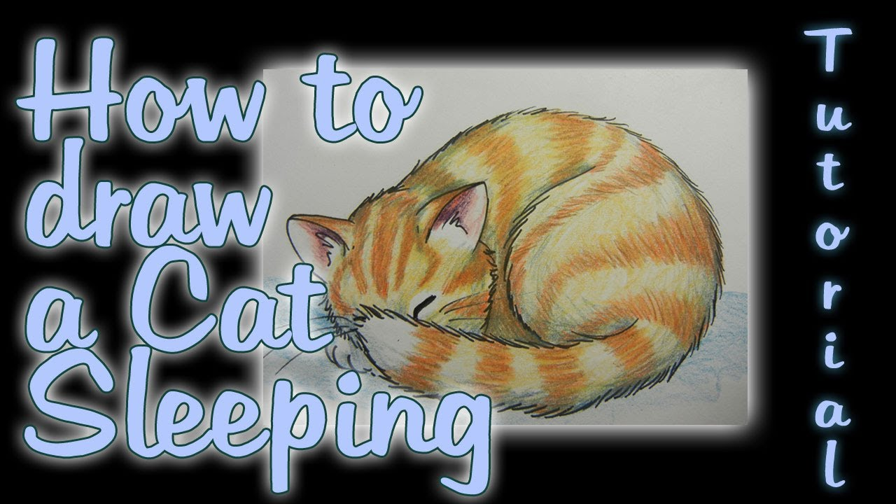 How To Draw A Cat Sleeping Youtube