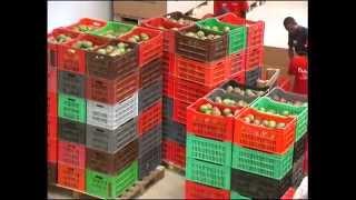 La filière mangue au Sénégal