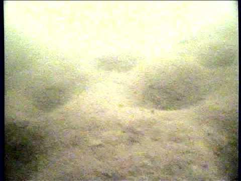 Карп зимой подводные съёмки