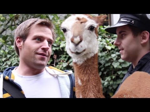 Der Porno Zoo (mit Scenetaketv Und Co.) video